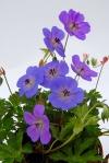 jeans fleurs (857x1280)